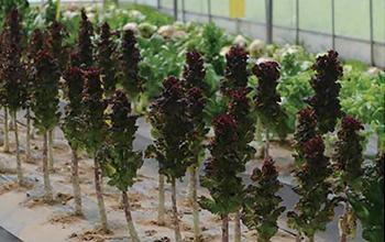 주거공간에서 도시농업의 기능 1:원예식물은 공기정화 능력이 뛰어나며, 특히 실내공기 정화는 원예적으로 해결이 가능하다.