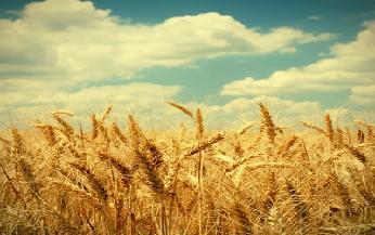 코카서스의 밀밭, 정말 가보고 싶었다:코카서스의 밀밭 정말 가보고 싶었다       이종석서울여대원예생명조경학과명예교수나는 어릴적부터 나중에 크면 꼭 한번 가보고 싶은 곳이 있었다