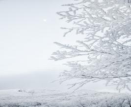 겨울 나목(裸木)의 유산을 보며:겨울 나목의 유산을 보며                     이종 석서울여대원예생명조경학과명예교수나는 퇴근 후 저녘을 먹고 나면 으례껏 그냥
