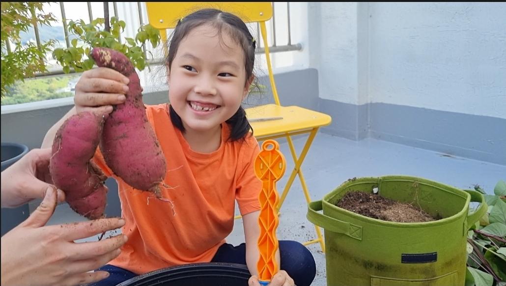 옥상 텃밭에서 땅콩, 고구마 수확하기:안녕하세요 아파트 탑층 옥상에서 화분으로 키운 땅콩과 고구마를 아이들과 함께 수확해 보았습니다  집에서 자투리 공간을 이용하여 텃밭 작물을